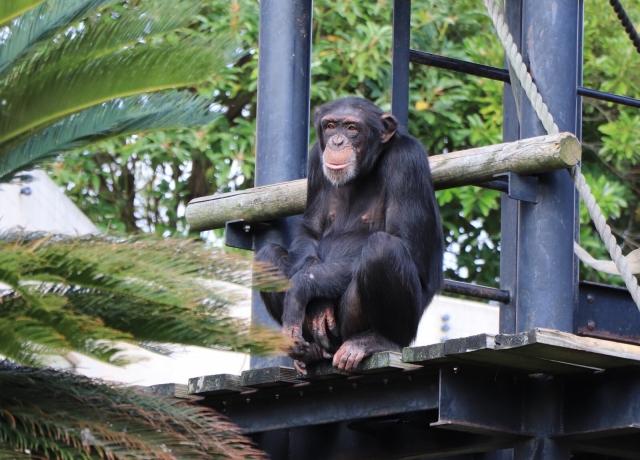 東山動植物園の混雑、渋滞状況やナイトズー、イベント、駐車場の混み具合