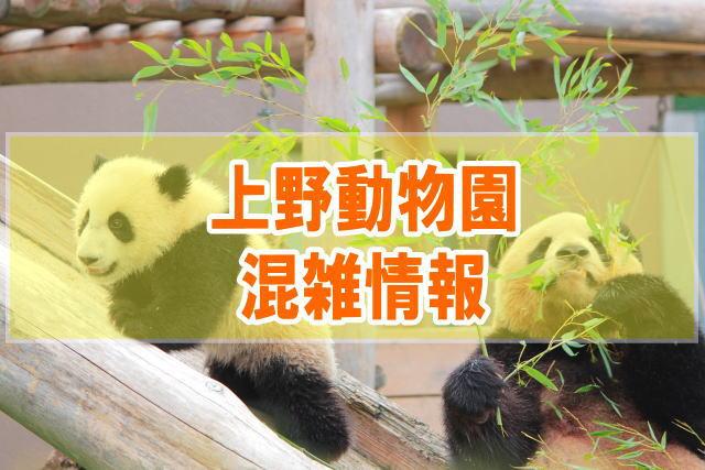 上野動物園の混雑状況やパンダの待ち時間、所要時間と入場者数情報