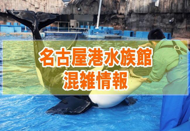 名古屋港水族館の混雑状況やシャチ、イルカショーの混み具合と口コミ評判