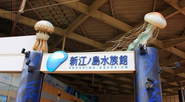 新江ノ島水族館の混雑状況やイルカショー、駐車場の混み具合と所要時間