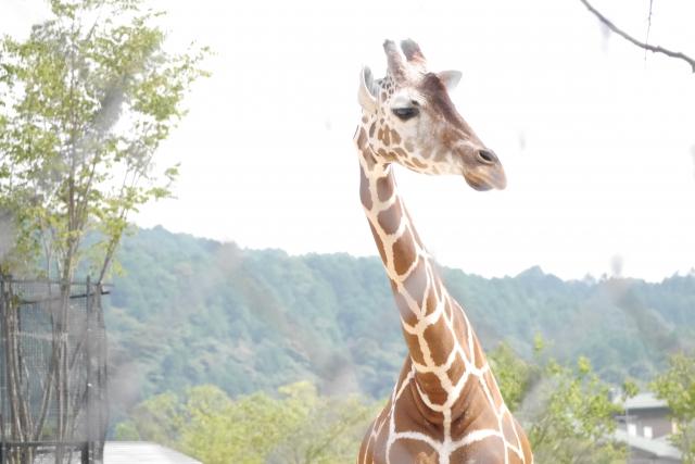 野毛山動物園の混雑状況や夏休み、ナイト、駐車場の混み具合と所要時間