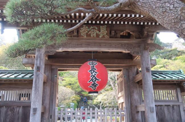 長谷寺(鎌倉)の混雑状況やあじさい、ライトアップ、駐車場の混み具合