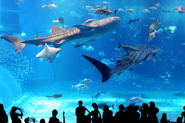 美ら海水族館の混雑、渋滞状況やGW、夏休み8月9月の混み具合と所要時間