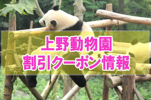上野動物園の割引クーポン情報2020!無料の入園方法とjafや前売り券のお得チケット