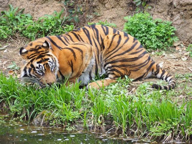 天王寺動物園の割引クーポン情報2019!年パスやjaf、前売り券など格安チケット