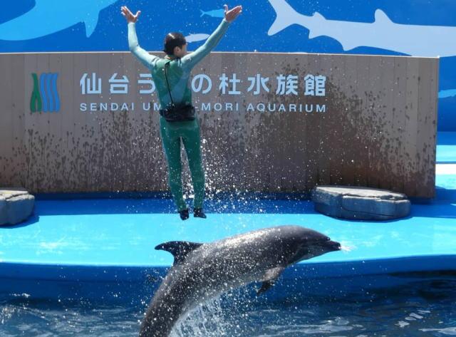 仙台うみの杜水族館の平日土日の混雑状況やイルカショー、駐車場の混み具合