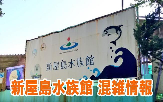 新屋島水族館の混雑状況やイルカショー、駐車場の混み具合と口コミ評判