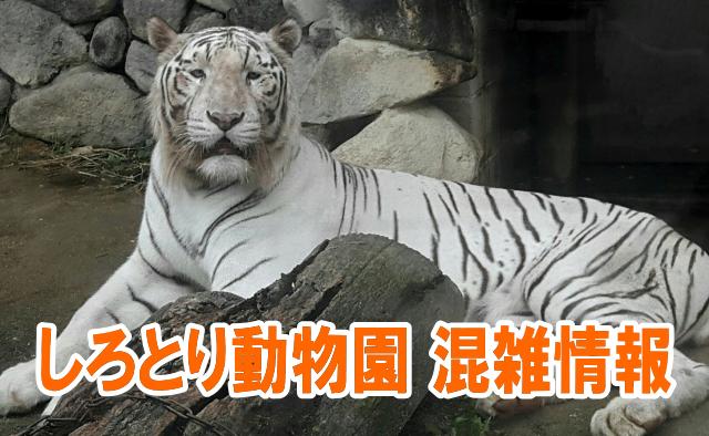しろとり動物園の混雑状況や夜の動物園、駐車場の混み具合と評判口コミ