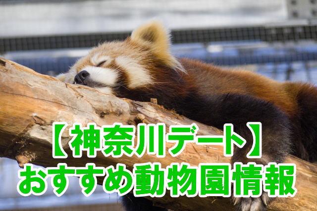 神奈川・横浜の動物園でデートにおすすめスポットの混雑、割引情報まとめ