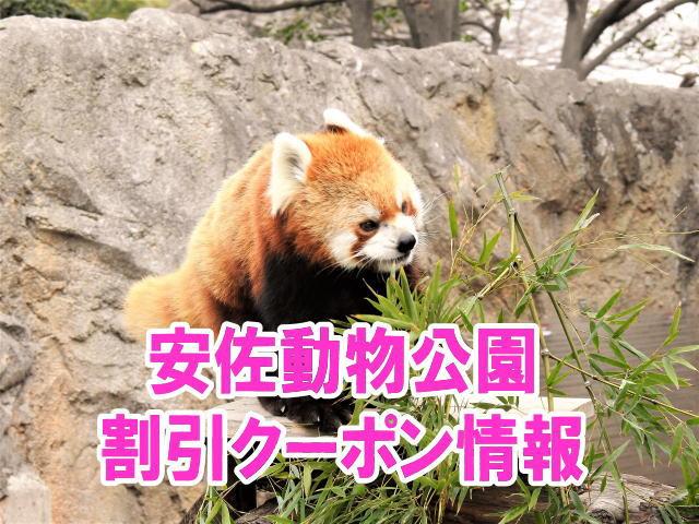 安佐動物公園の割引クーポン情報2019!無料入園とjafや年パスなどお得チケット