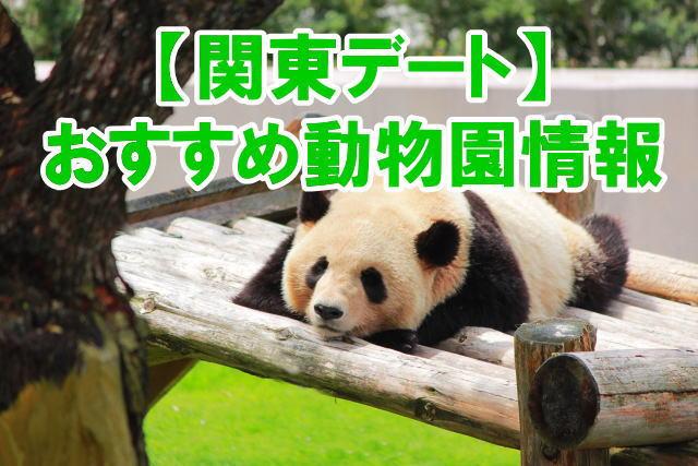 関東の人気動物園デートにおすすめスポットのポイント、混雑、割引情報まとめ