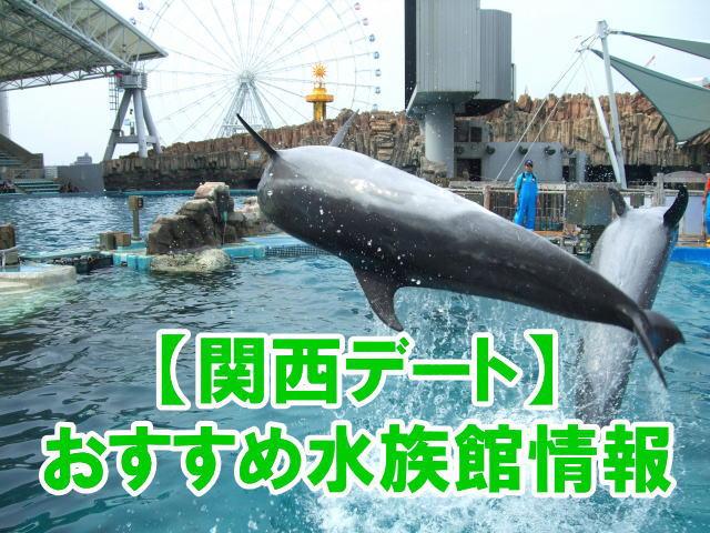 関西の水族館デートにおすすめ人気スポットのポイント、混雑、割引情報まとめ