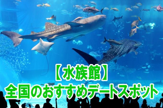 全国の人気水族館デートにおすすめスポットのポイント、混雑、割引情報まとめ