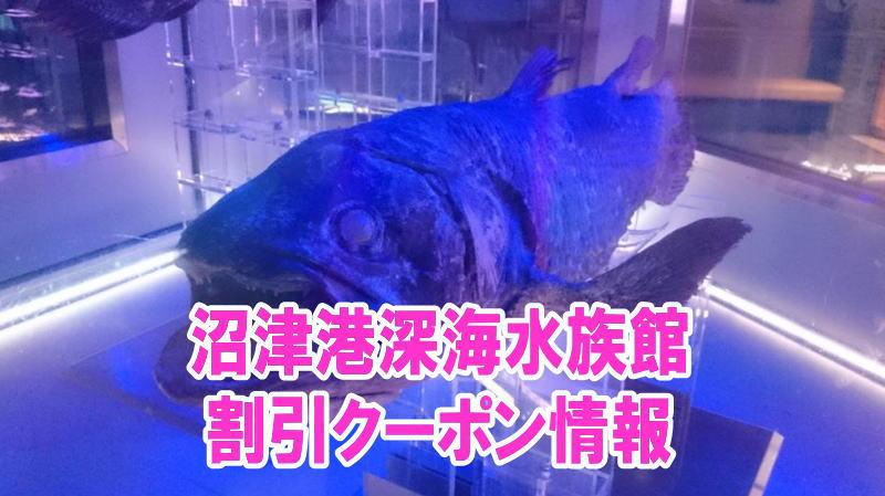 沼津港深海水族館の割引クーポン情報2019!前売り券やjaf、年パスなどお得チケット
