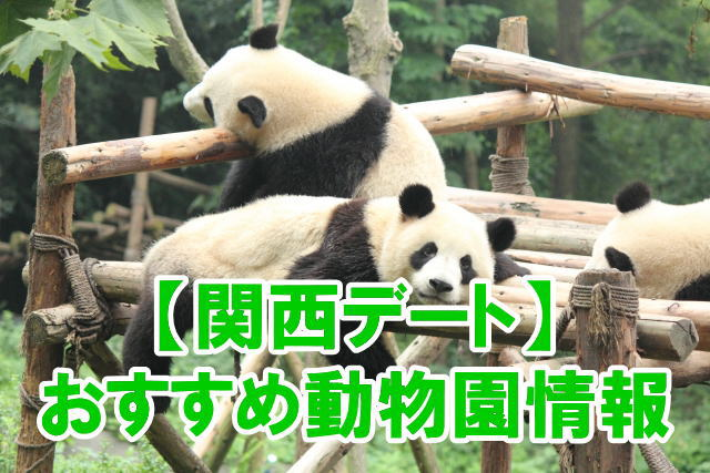関西の動物園デートにおすすめ人気スポットのポイント、混雑、割引情報まとめ