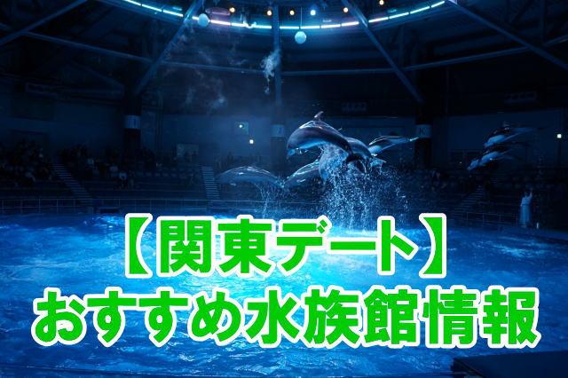 関東の人気水族館デートにおすすめスポットのポイント、混雑、割引情報まとめ